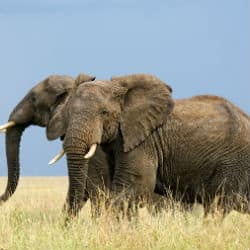 Conservationist Killed Whilst Chasing Elephant Poachers