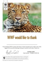 Adopt a Big Cat Certificate