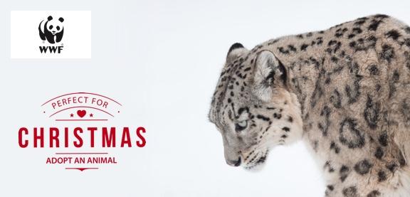Adopt a Snow Leopard