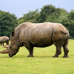 Kenya Raises The Stakes In The Fight Against Poaching