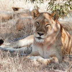 Zambia Partially Lifts Ban On Safari Hunting
